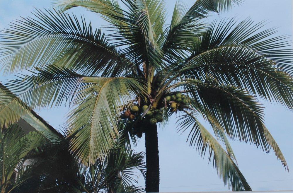 costa palm.jpg
