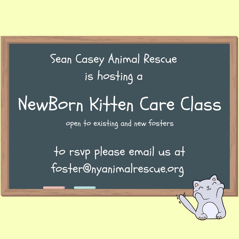 NewbornKittenCareClass418.png