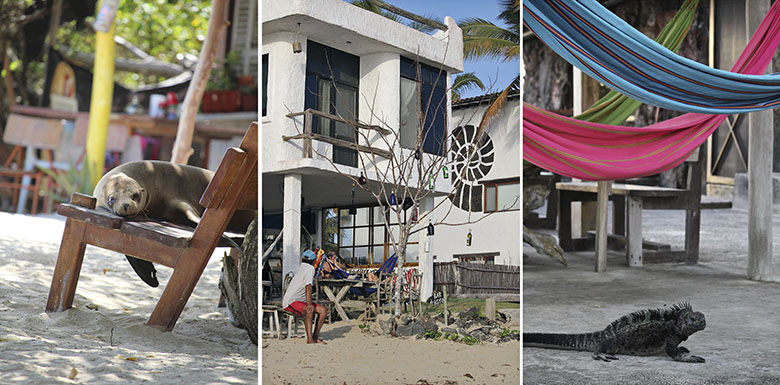 alojamiento hoteles hostales mochilero galapagos