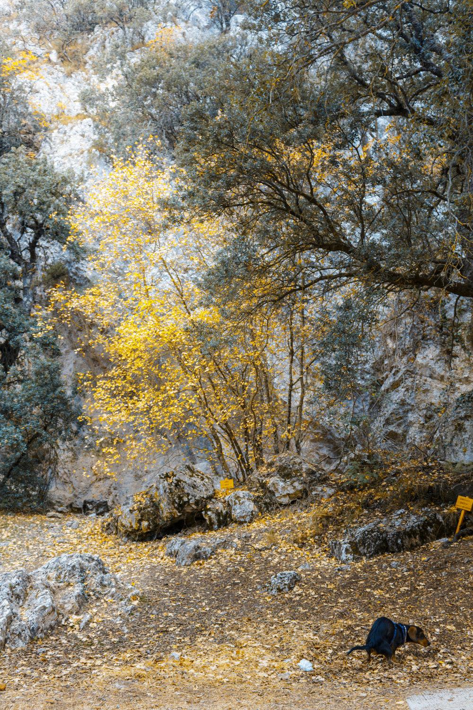 otoño colores font roja alicante naturaleza menda cagando perro