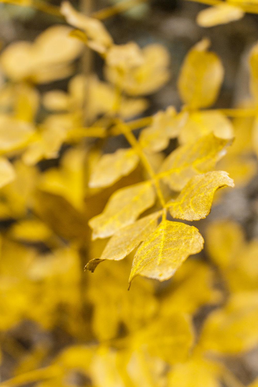 otoño colores font roja alicante naturaleza macro arbol hoja