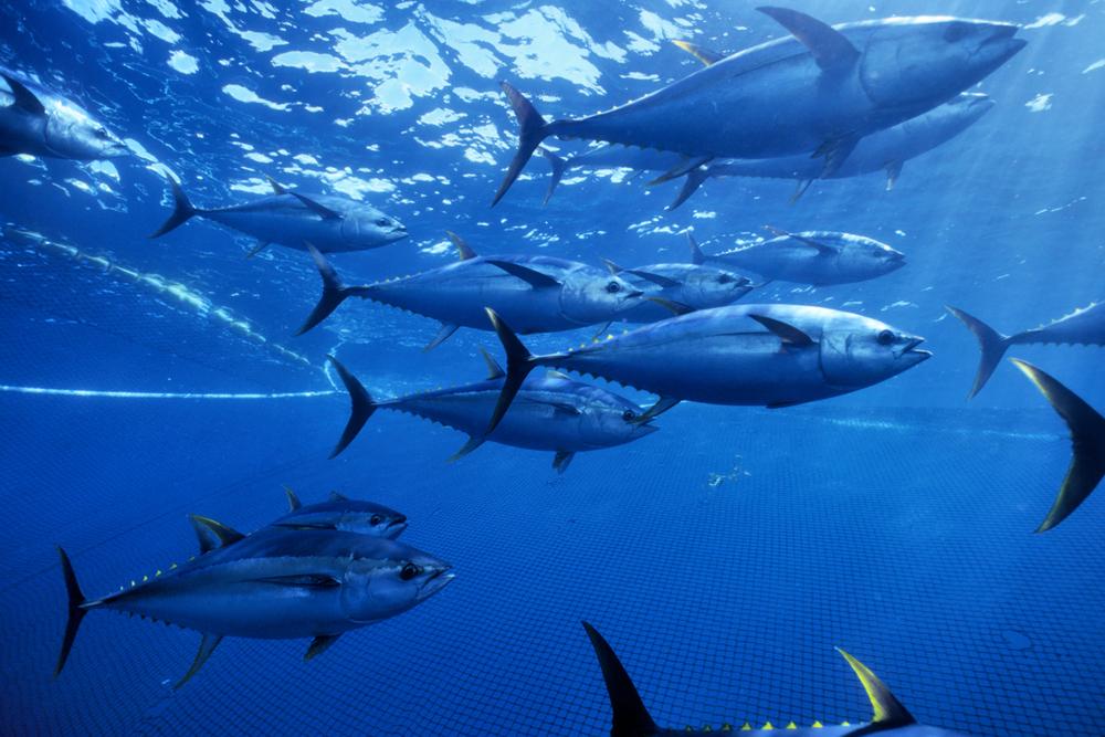 © naturepl.com | Doc White | WWF