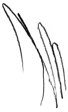 scribble01.png