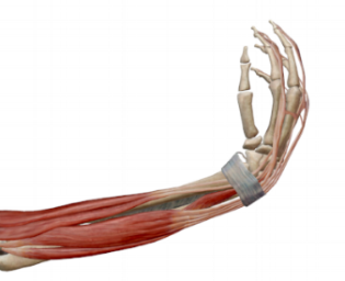 Fig.2: Wrist flexion