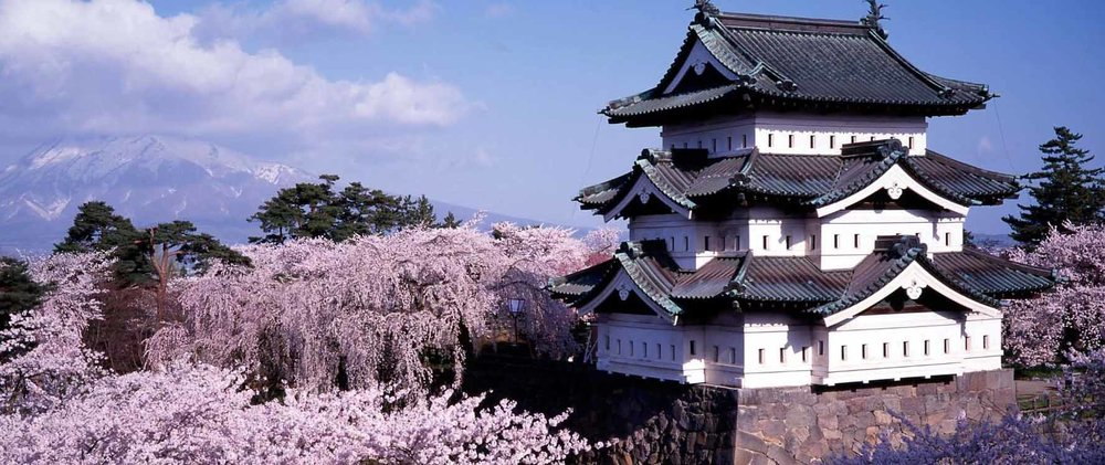 Hirosaki castle in Japan, surrounded by cherry blossom tree