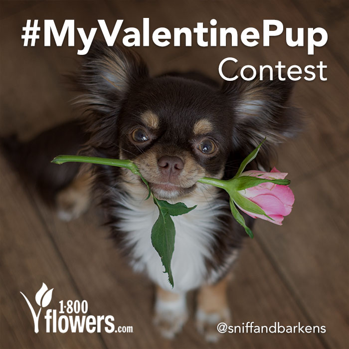 Valentine's Day Campaign We partnered with 1-800-Flowers to run a Valentine's Day themed Instagram contest. The goal was to raise brand awareness leading up to the holiday.