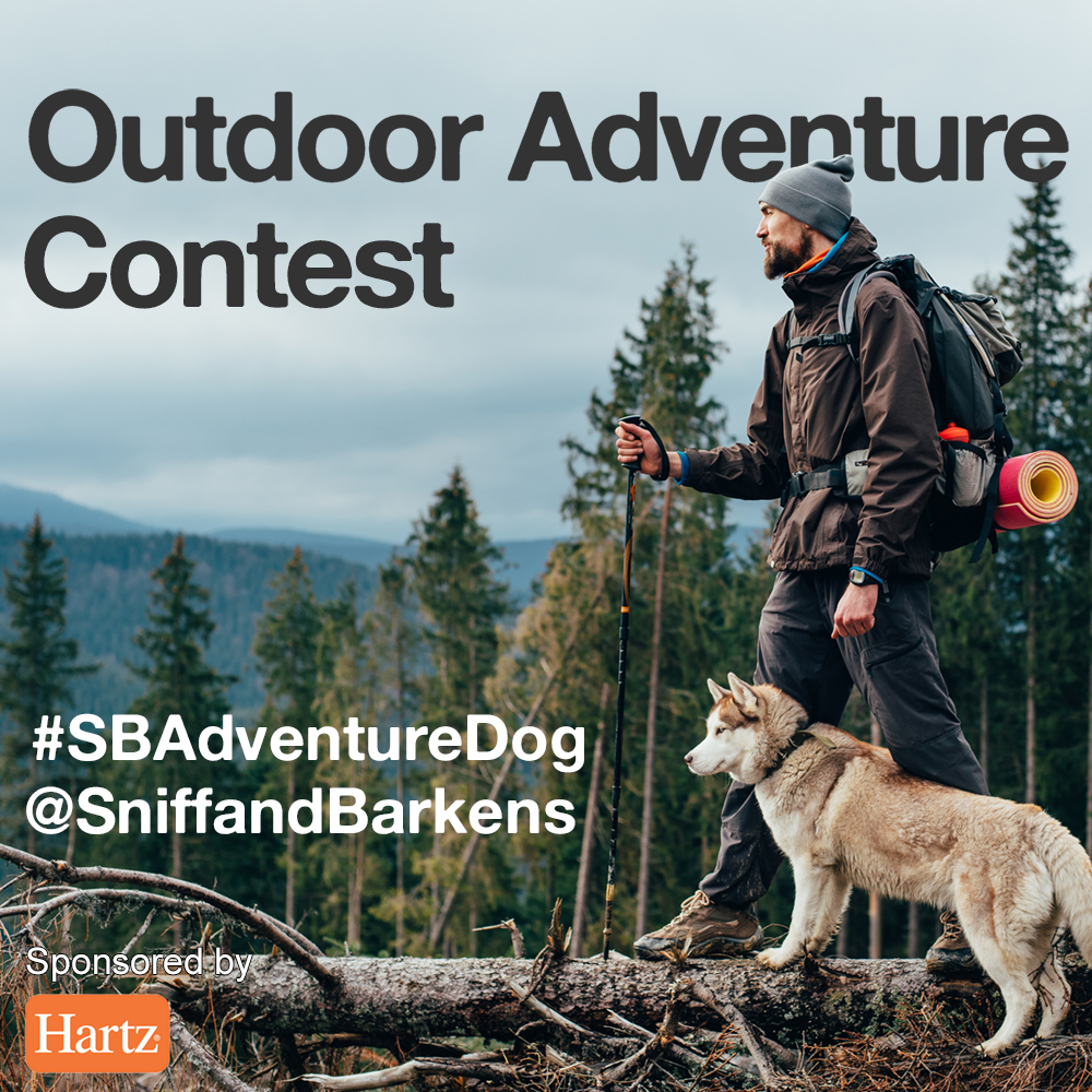 Outdoor Adventure Campaign Building on the outdoor theme of the video we created with Hartz, we launched an Instagram campaign that featured user-submitted photo entries of dogs on outdoor adventures.