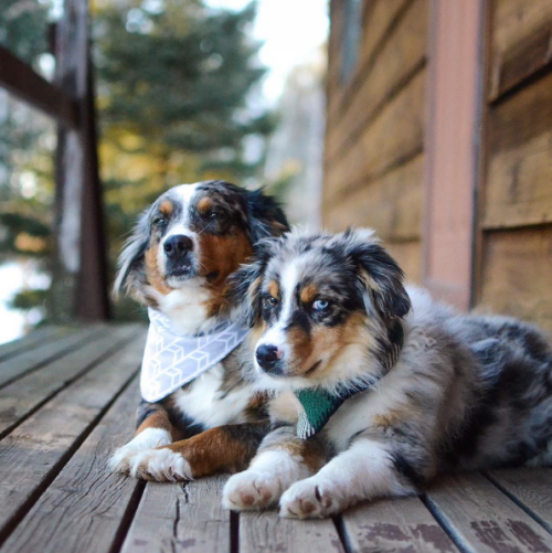 Holly & Juneau