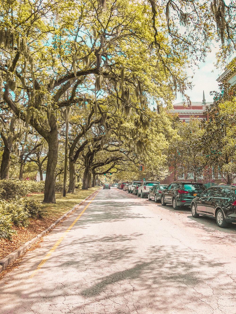 savannah trees road down (1 of 1).jpg