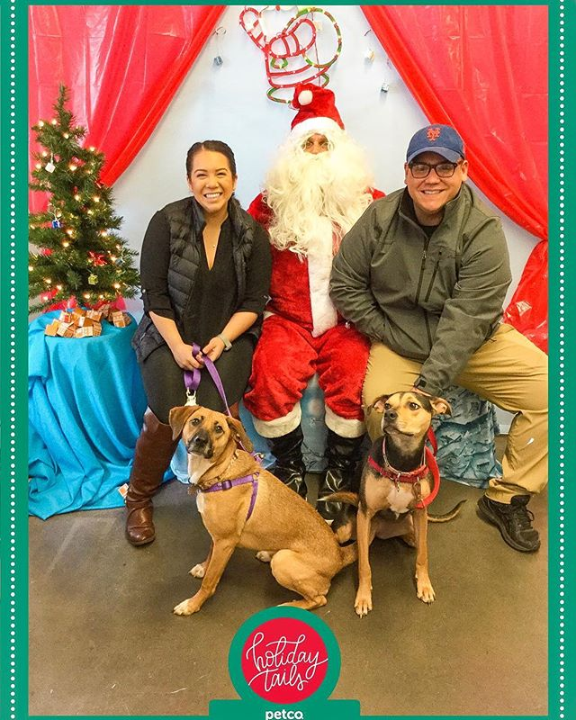 Merry Christmas from our little family to yours! Luna and Willow are wishing everyone stockings full of yummy treats and chew toys! 🎄❤️🐶 #santapawsforacause #atlantachristmas #jandradventuresshop #jandradventures