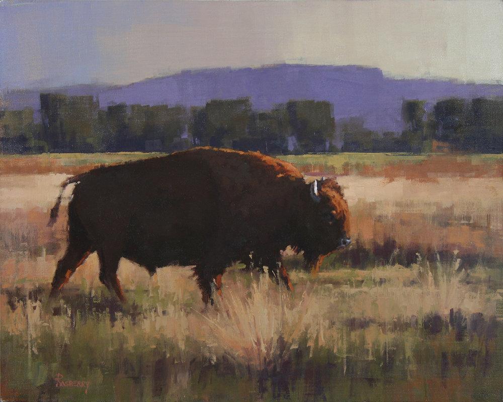 Roaming Bison.jpg