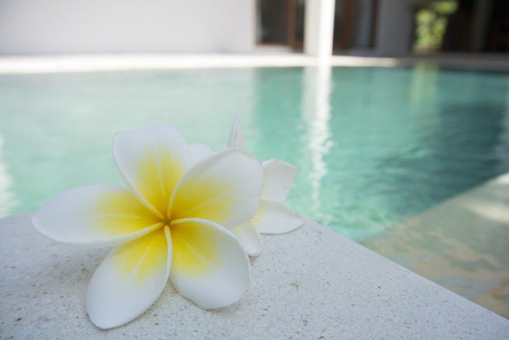 flower-1460889.jpg