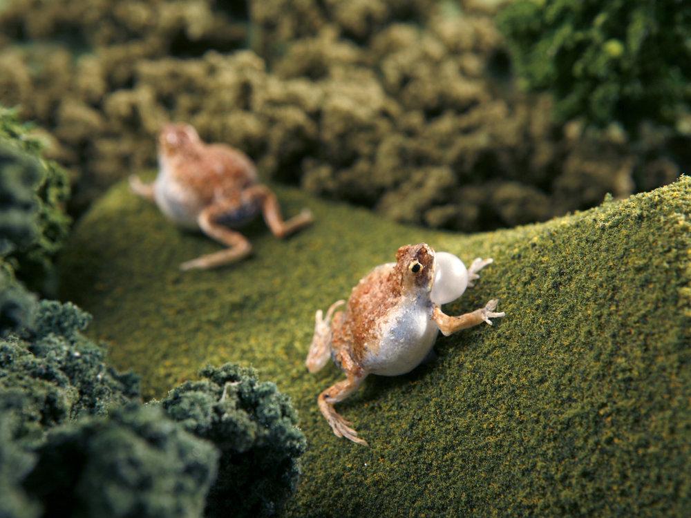 frog_4.jpg