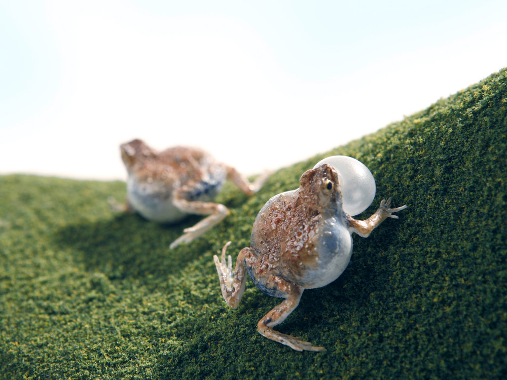 frog_8.jpg