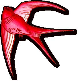 rb-redbird.png