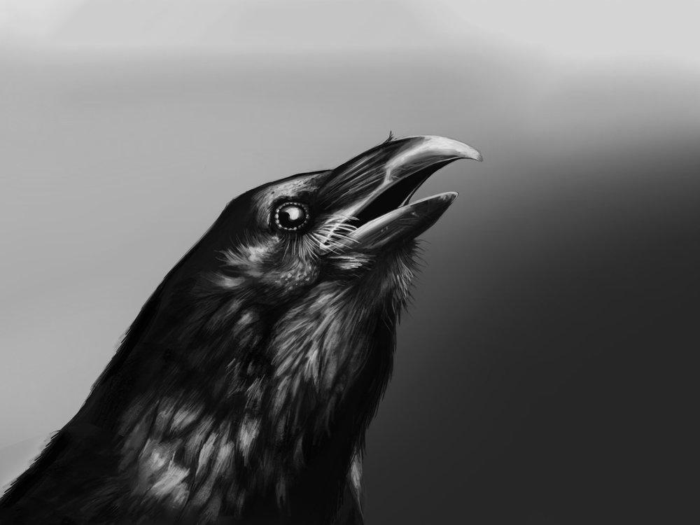 Raven_black.jpg
