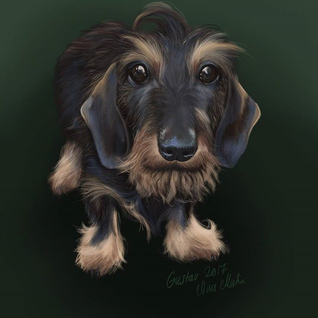 The little cute dachshund, Gustav. #ipaddrawing #ipadpro #procreateapp #applepen #illustration #drawing #dachshundlovers #dachshund #dog