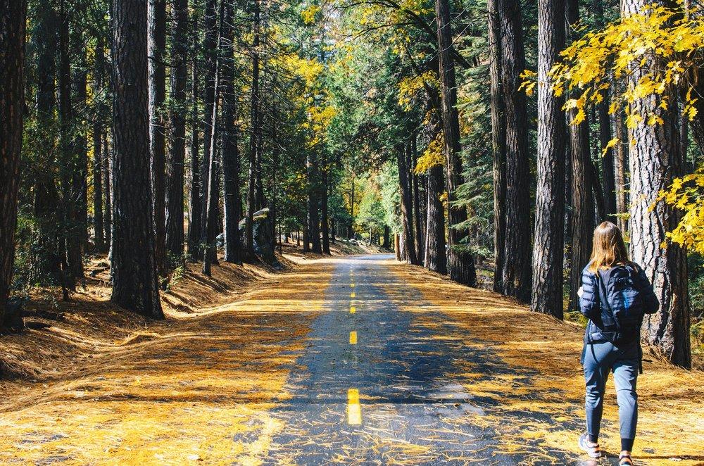 road-2598213_1920.jpg