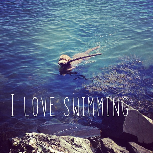 How are you spending this beautiful Sunday? We are enjoying time in the water!
