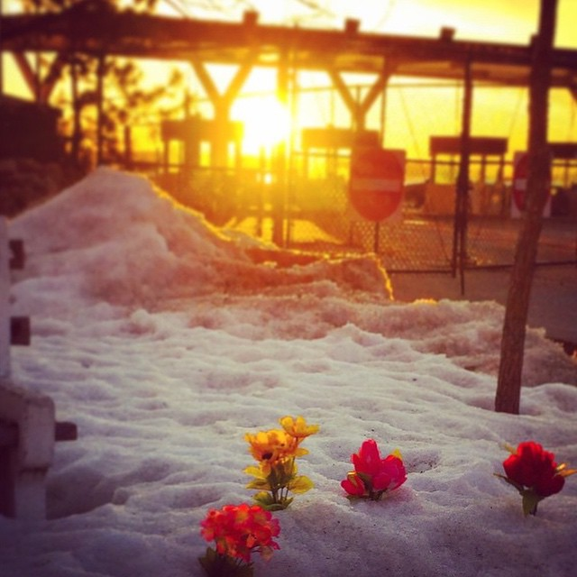 These flowers @alexnoyes came across this morning put a little spring in our step!  Happy first day of spring, Rêvers! #regram #springiscoming