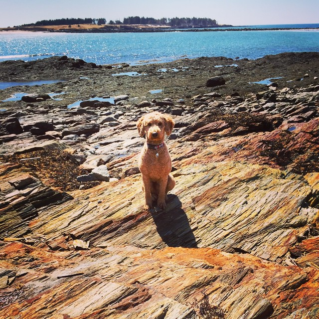 One glorious morning in Maine! Raglan wishes everyone a happy, sunny, WARM Wednesday!