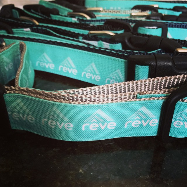 New delivery: Rêve dog collars! We just got 8 more just like the one Raglan has. Pick one up for your pup(s) at the studio this weekend! #BarkItUp #RêvePupsRule