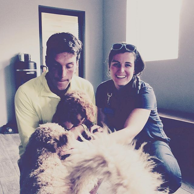 Rags welcomes Rozzie, Brian and MJ's new goldendoodle, to the Rêve family!! She's adorable, @farley1381!