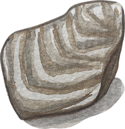 Oyster-2.png
