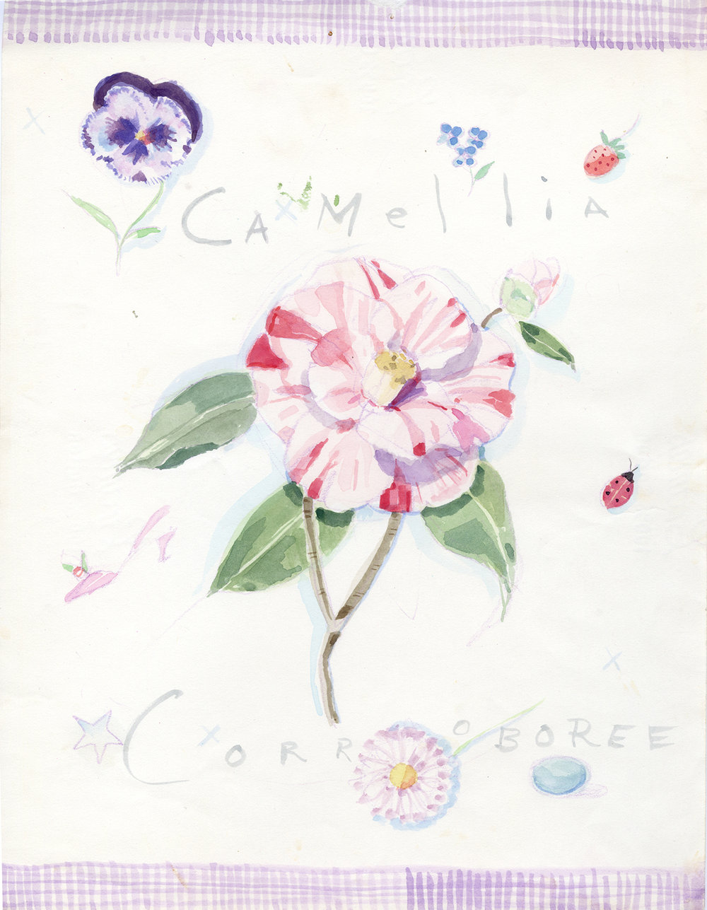camellia_corroboree.jpg