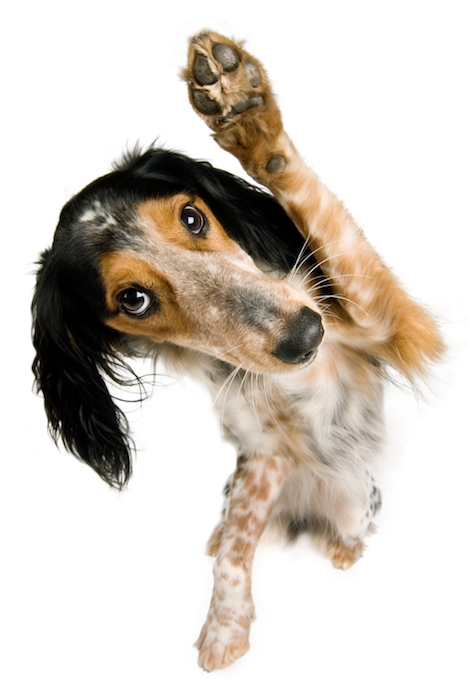About-waving-dog.jpg