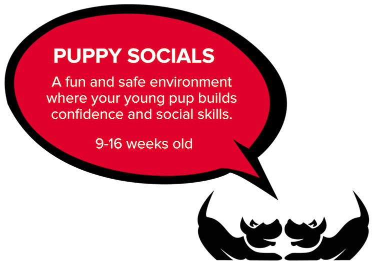 Bravopup puppy social in Oakland, Berkeley, El Cerrito, and Alameda.