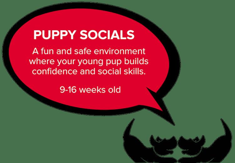 Bravopup puppy social in Oakland, Berkeley, El Cerrito, and Alameda.