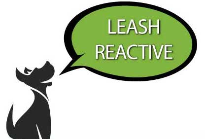 leash-reactive-min.jpg
