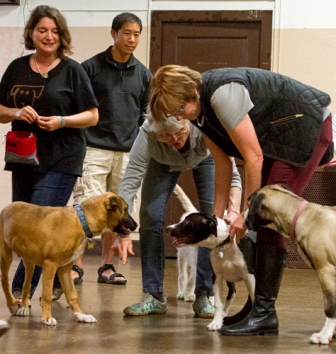 Trainer Sandi Thompson (holding black & white pup) performs a brief consent test to let the tan pup vote with his feet.