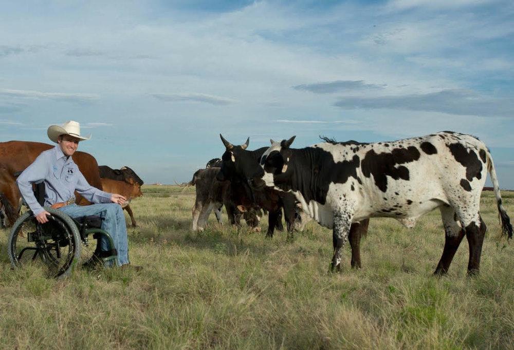 Koben with cattle.jpg