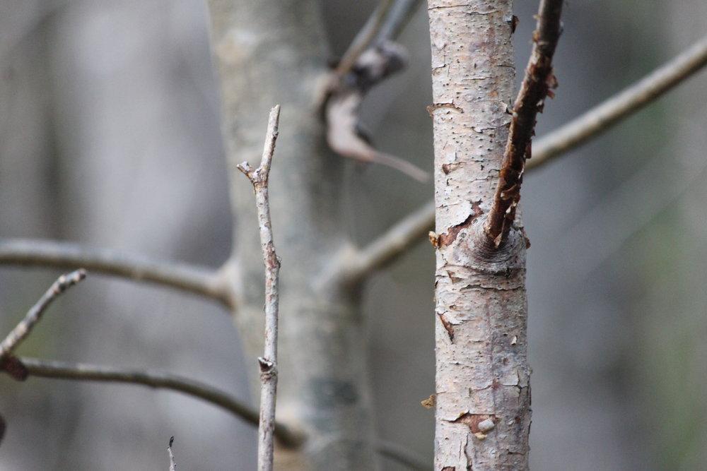 Trees Web.JPG