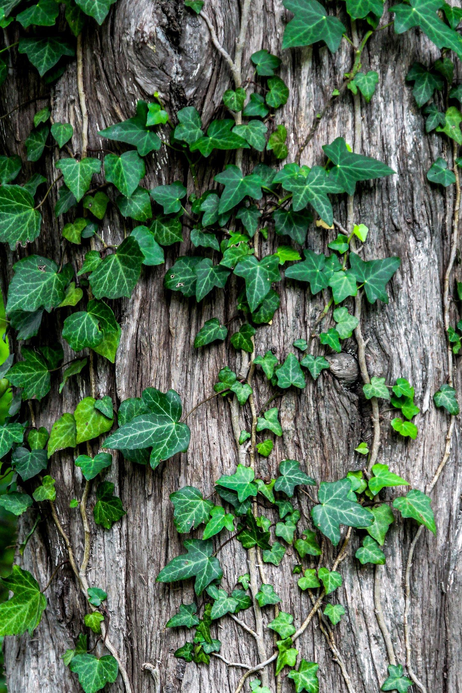 negative effects of grapevine communication
