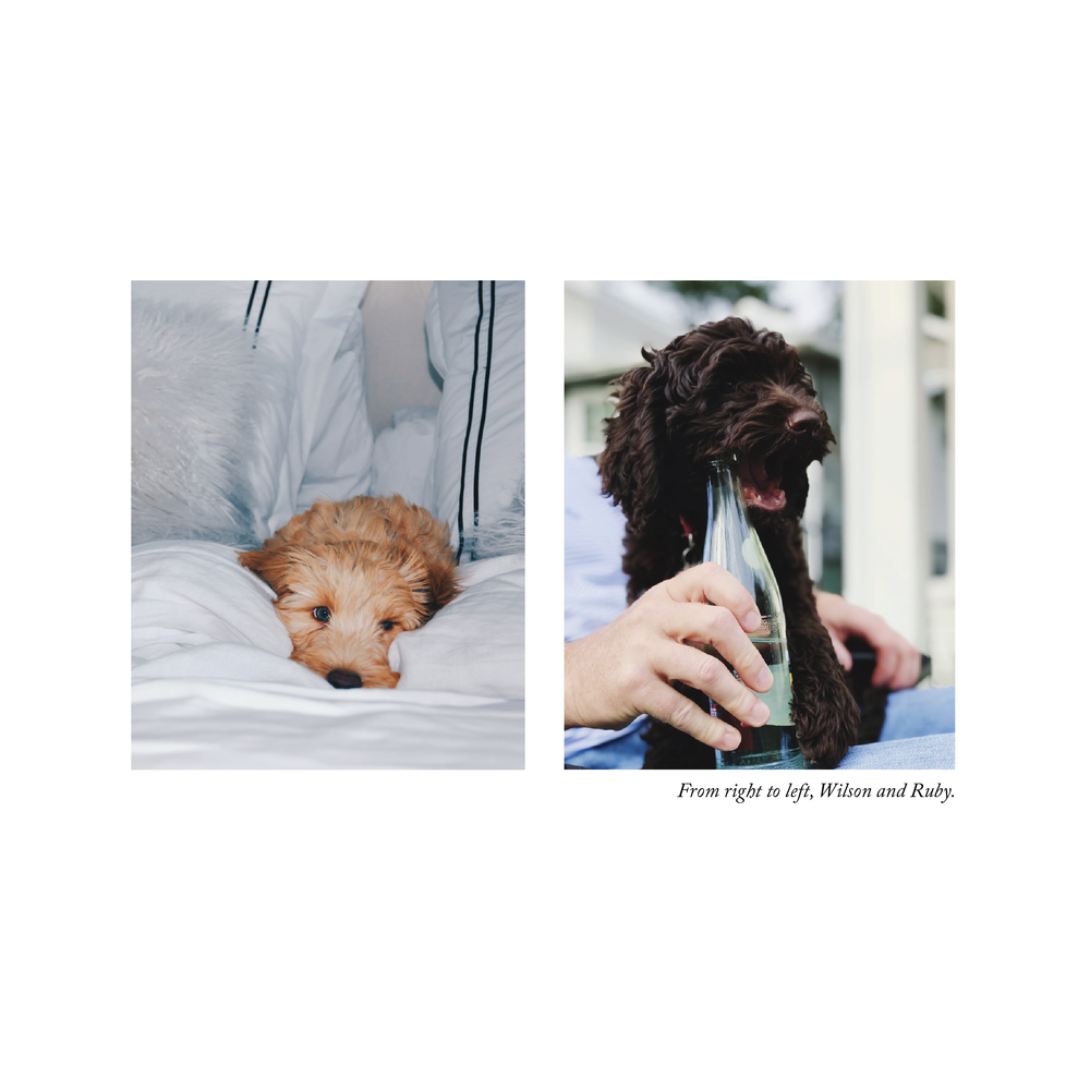 Updated Southern Labradoodles Brand Book-04.png
