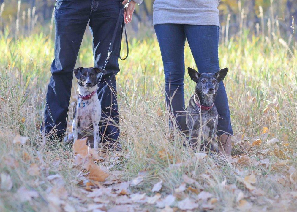 _chatfieldreseroir_coloradoengagementphotographer_www.kisaconrad.com_607A7910.jpeg