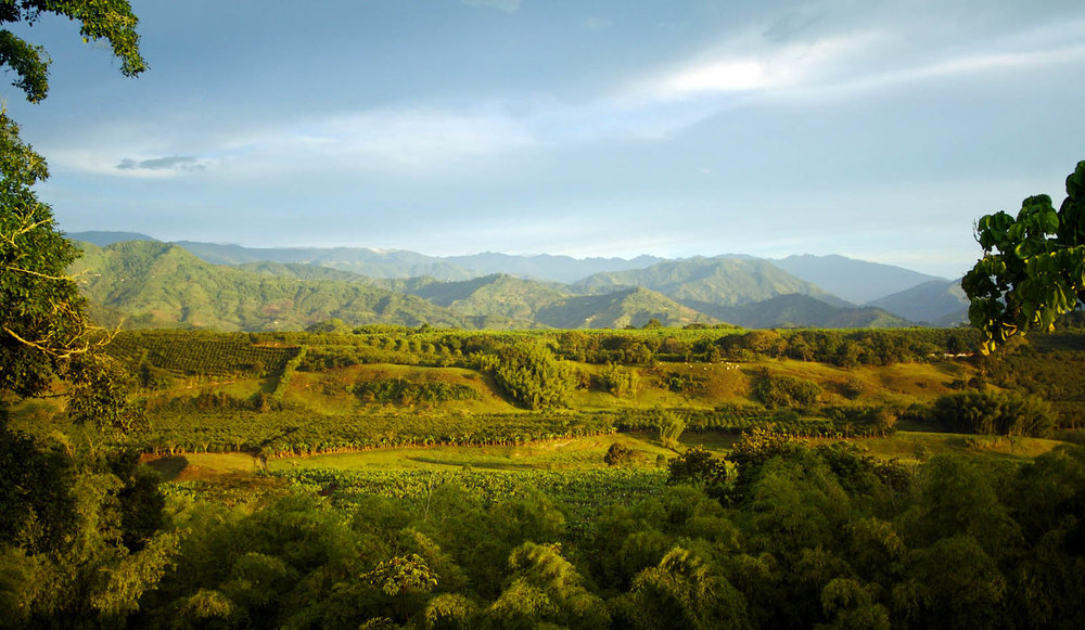 Landscapes of the Coffee Triangle, Colombia