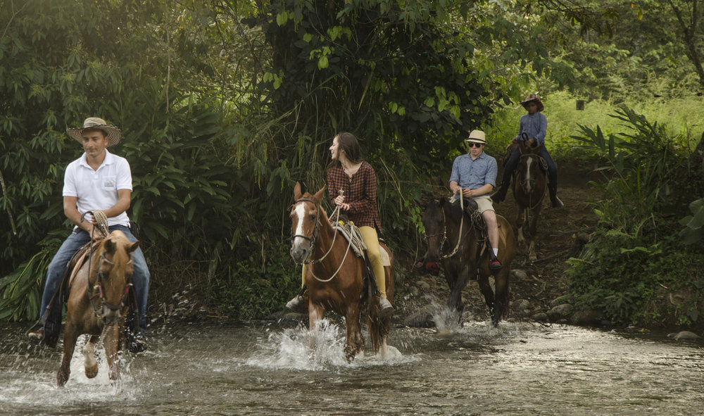 Horseback Riding through Colombian Plantations
