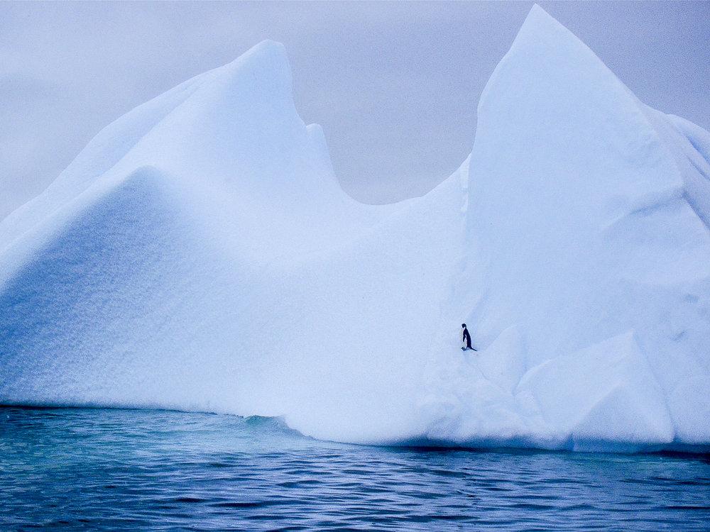 Stunning Iceberg in Antarctica