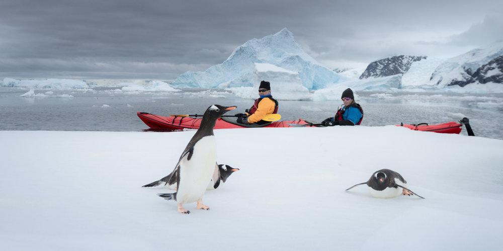 Finding Penguins in Antarctica