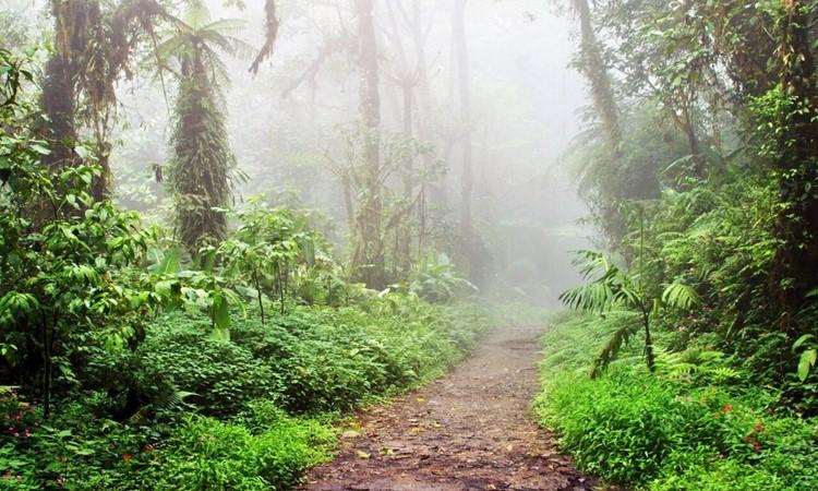 Monteverde Cloud Florest