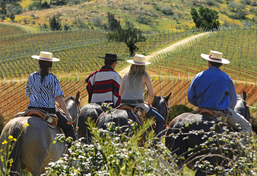 Horseback riding on a vineyard tour of La Casona at Matetic - Casablanca Valley, Chile