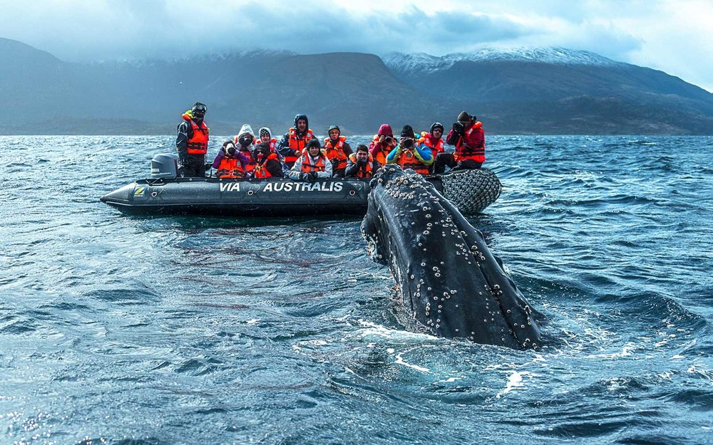 Meeting whales next to fjords