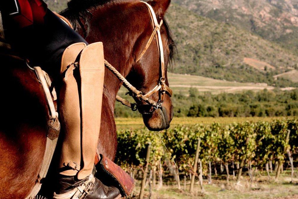 Horseback Riding excursion at VIK Chile