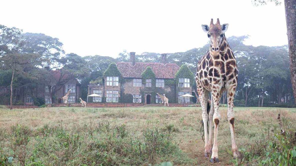 Day 1 - Giraffe Manor, Nairobi, Kenya