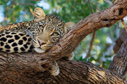 Craft Travel — Best Tour Package for African Self Drive
