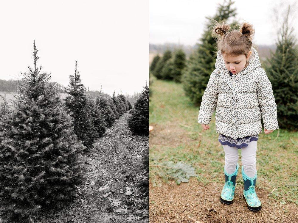 TreeFarm2018-17.jpg